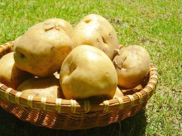 ジャガイモの栄養