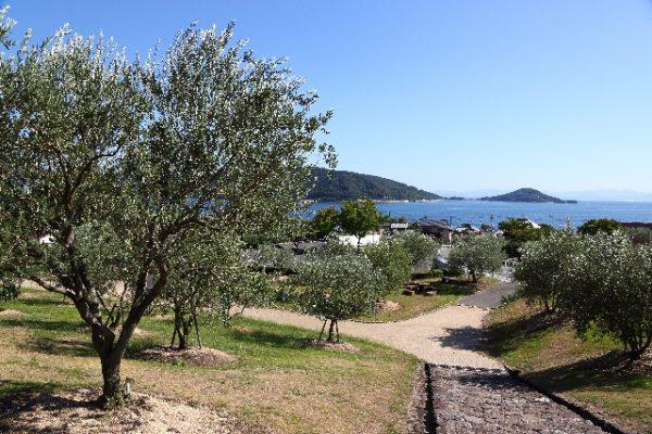 オリーブオイルと小豆島