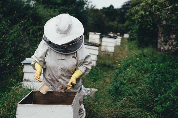 マヌカハニーの養蜂家