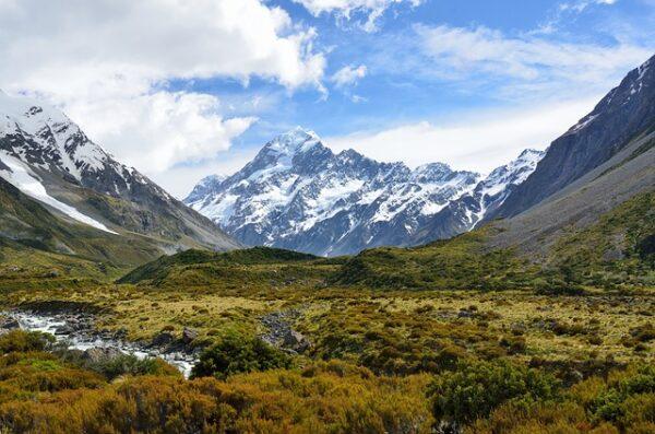 ニュージーランドのマヌカハニー